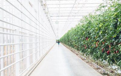 Tesi di laurea: come i Big Data creano valore nella Vertical Farm