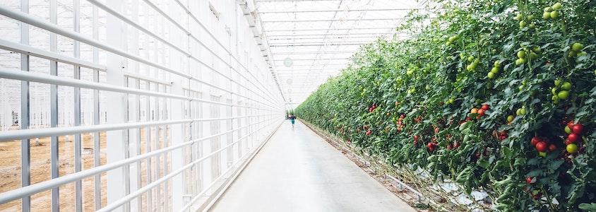 Vertical farm e agricoltura sostenibile